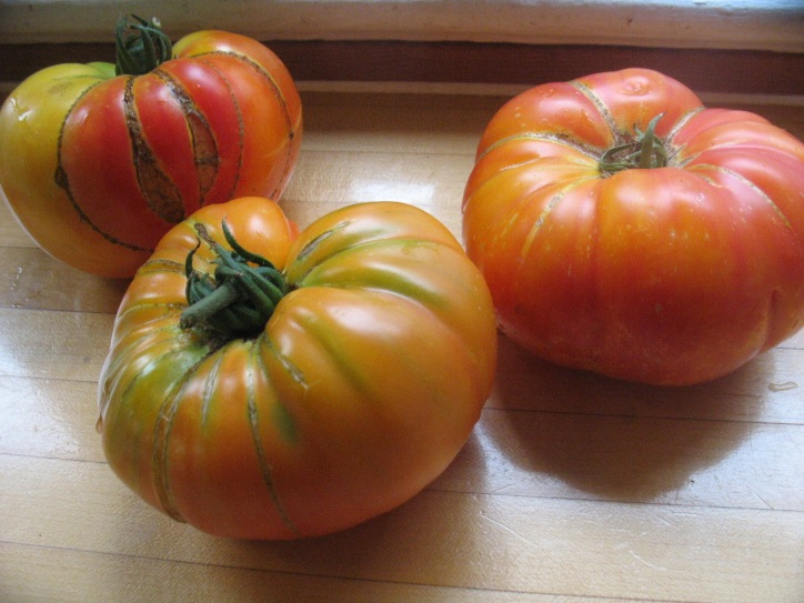 big garden tomatoes