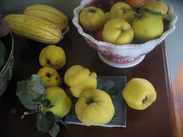 quince and delicata